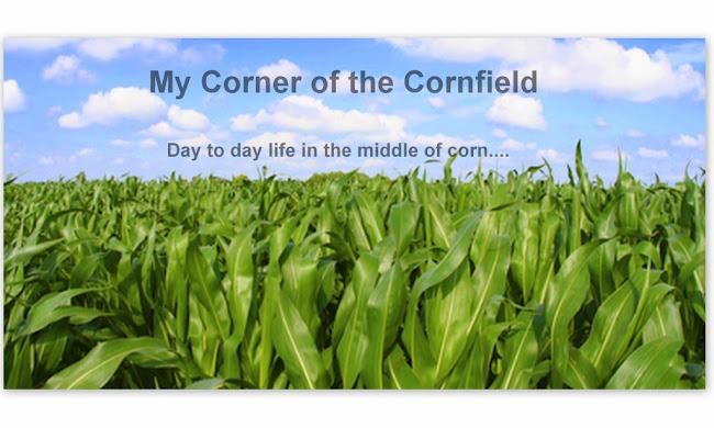 My Corner of the Cornfield