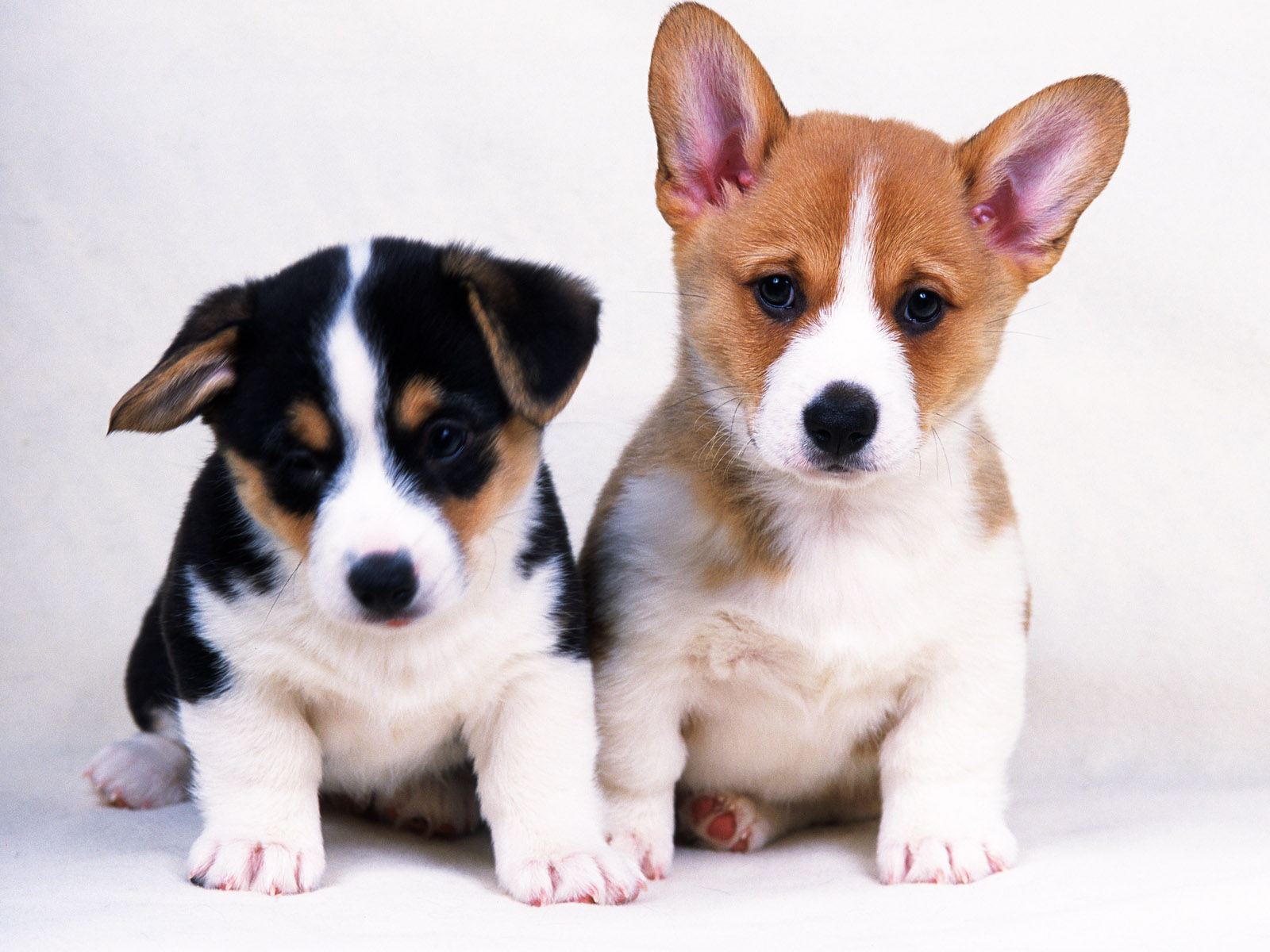 Most popular dog names of 2012