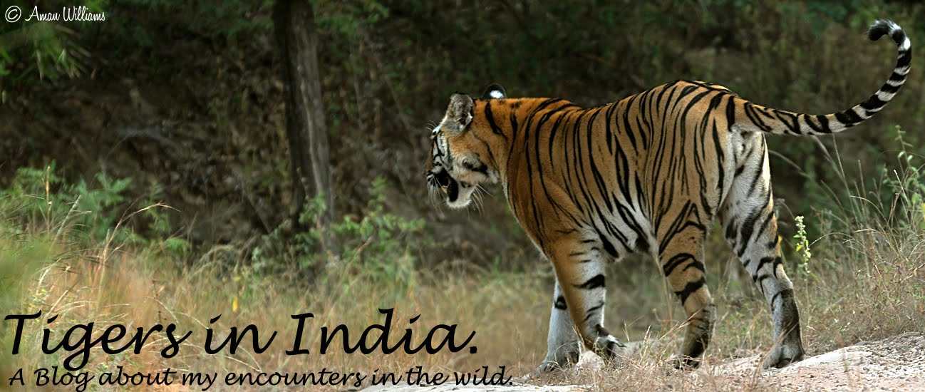 reserve of tigers in india