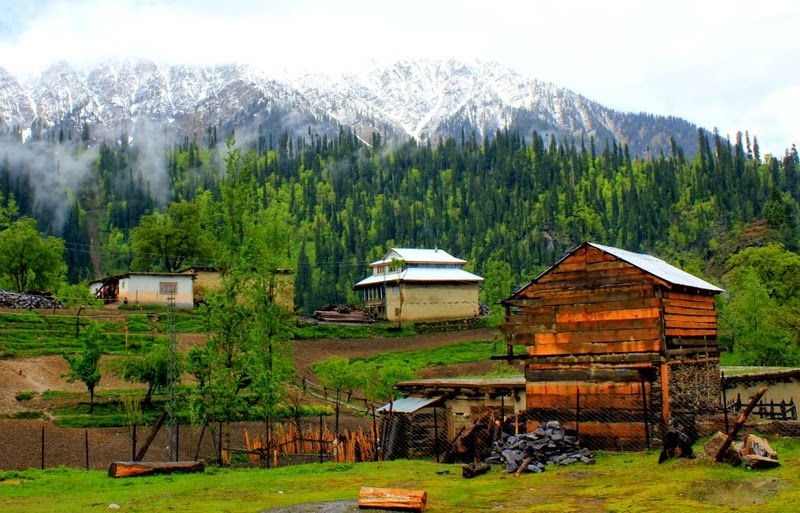 srinagar mature singles Depending on the mature size and the purpose for which the onion is forming a single layer of cells and 'srinagar' in the india-kashmir region.