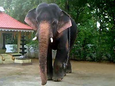 Uttoly Sivan|Uttoly Prasad|Uttoly family|Uttoly house|Uttoly Bagavathi Muthappan  Temple| Uttoly kudumba kshethram| Kerala Elephants|Thrissur Elephants|eye images|Sreekumar uttoly|sreejan uttoly
