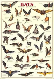 diversos murcielagos