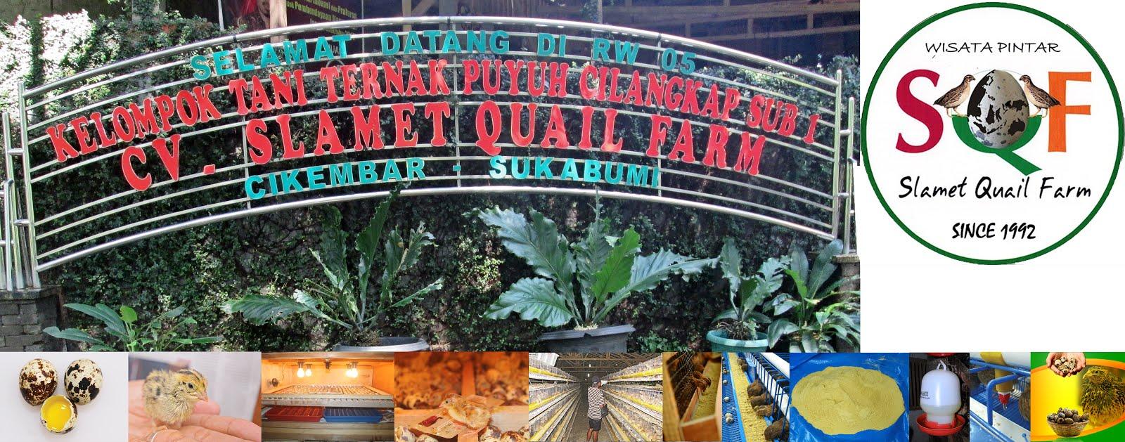 CV Slamet Quail Farm Sukabumi