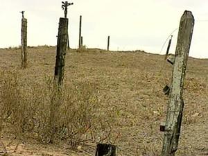 Seca em Vila Pavão, ES, prejudica agricultura e agropecuária