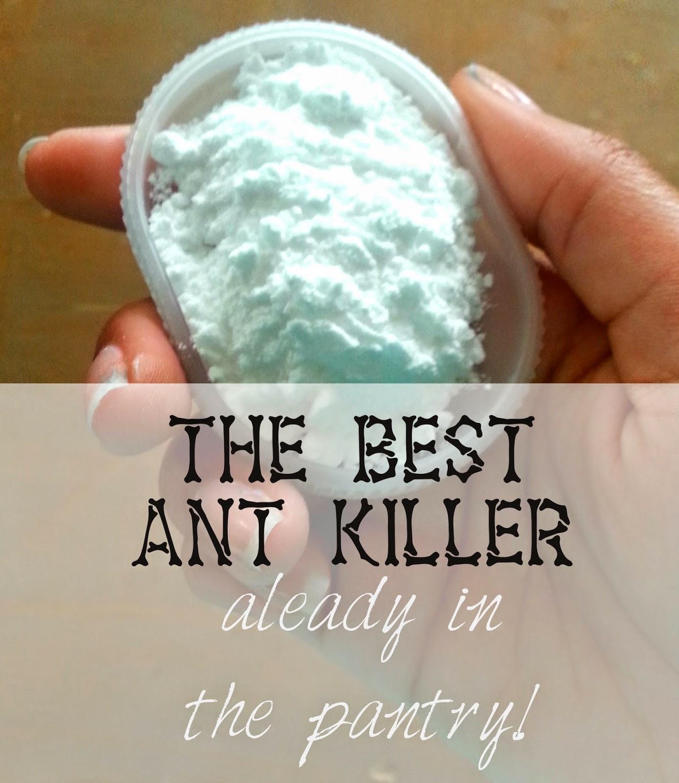 Best Natural Ant Killer For Indoors