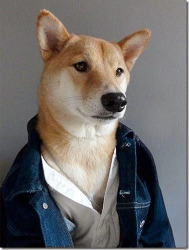 Dog with fashionable Clothing