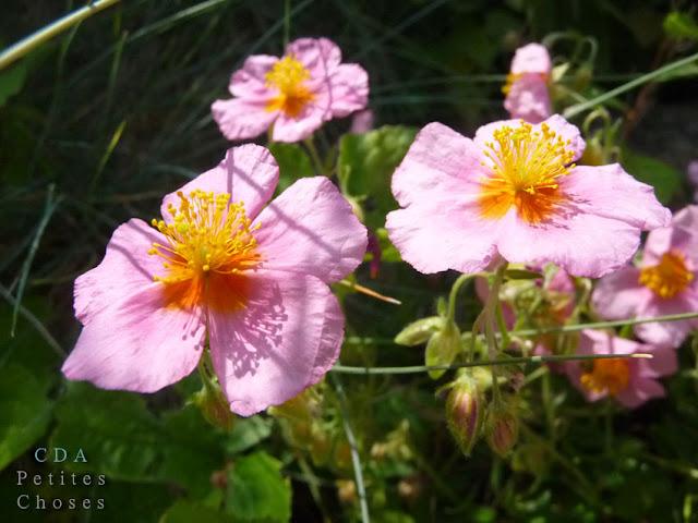 envoyer bouquet de fleur