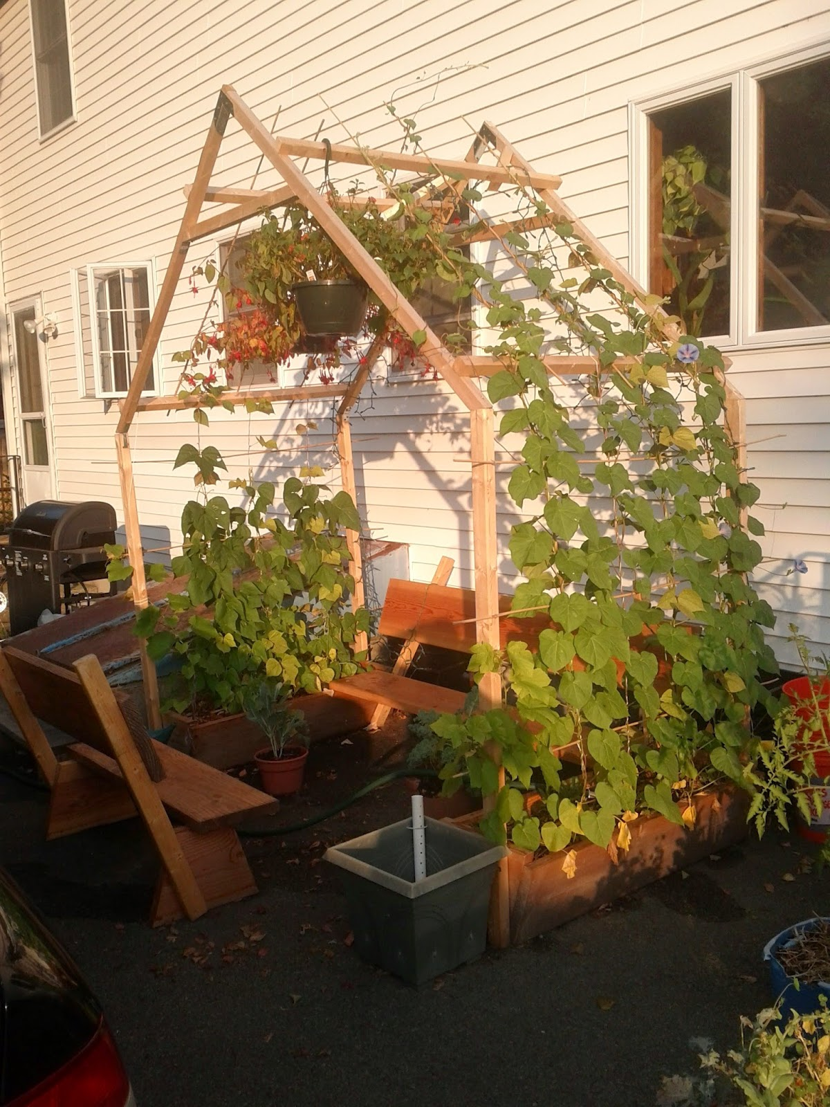 Building a Grape Arbor | Alli\'s Garden