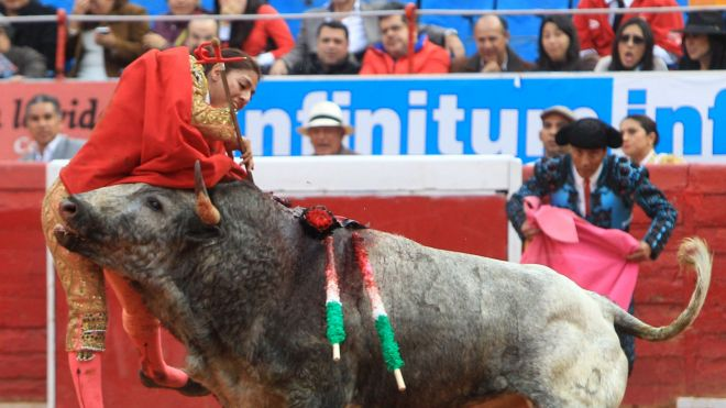 TheRight  baby bull takes out a female matador