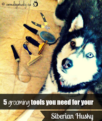 grooming tools for siberian husky