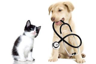Pet Health Insurance Plans