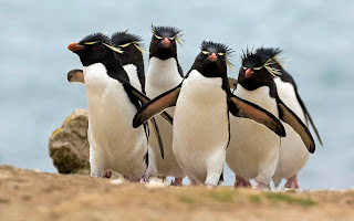 Penguins Cute Desktop Wallpaper 1920x1200