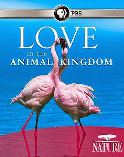 Watch Nature: Love in the Animal Kingdom (2013) movie free online