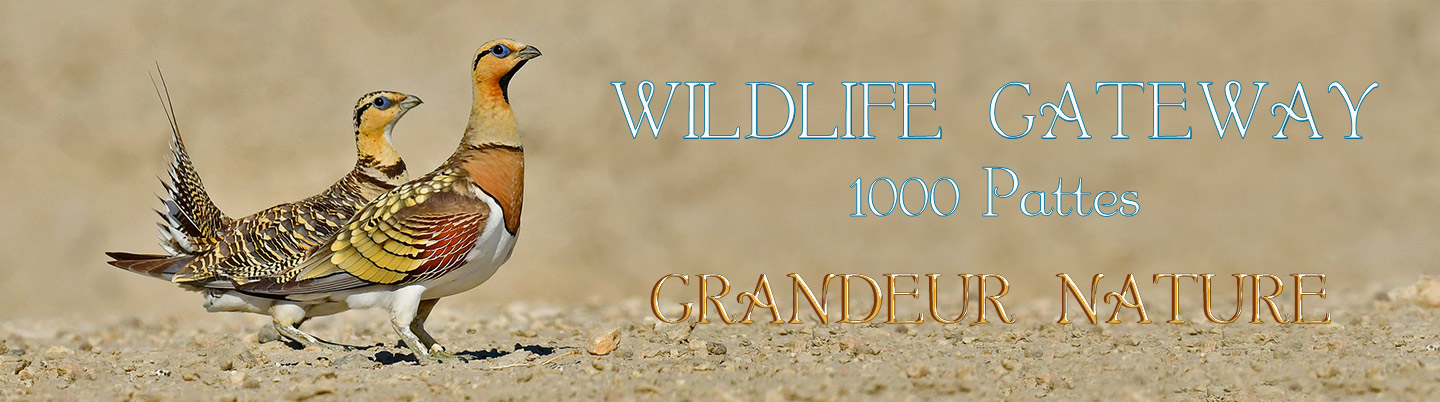 1000 PATTES - WILDLIFE GATEWAY