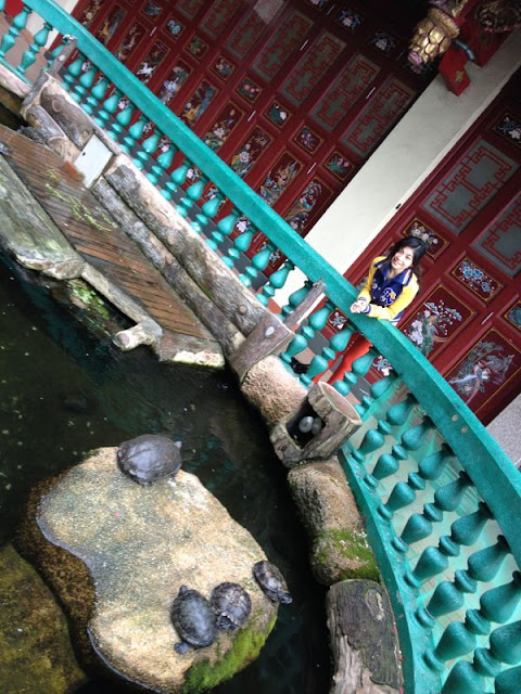 chin swee temple genting highlands malaysia turtle farm