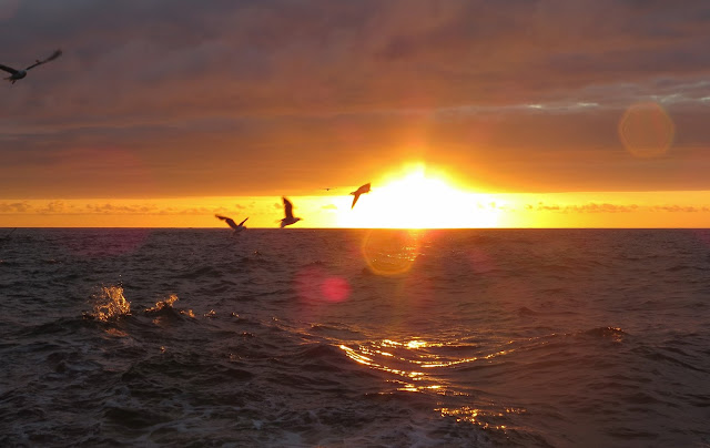 Scilly Pelagic Sunset