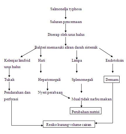 artikel mekanisme obat kortikosteroid