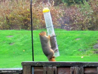 Squirrel beats birdfeeder