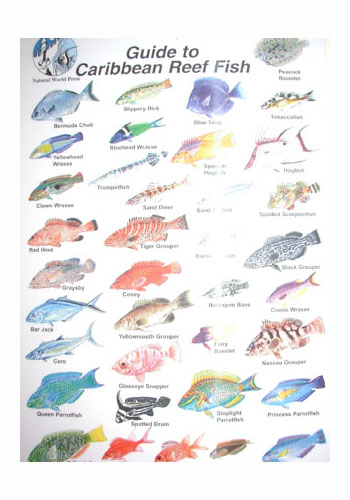 Names of fish in the coral reef for Names for a fish