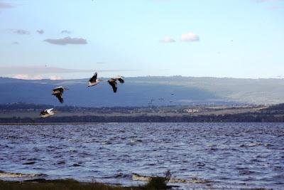 lago nakuru, Lake Nakuru National Park, africa, kenya