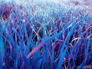 hierba matices
