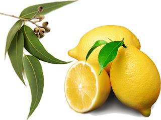 http://1.bp.blogspot.com/-RxJTaAXJDCc/TcAueEqGcbI/AAAAAAAAARI/nOiwXhJLmmE/s1600/Lemons-euclyptus.jpg