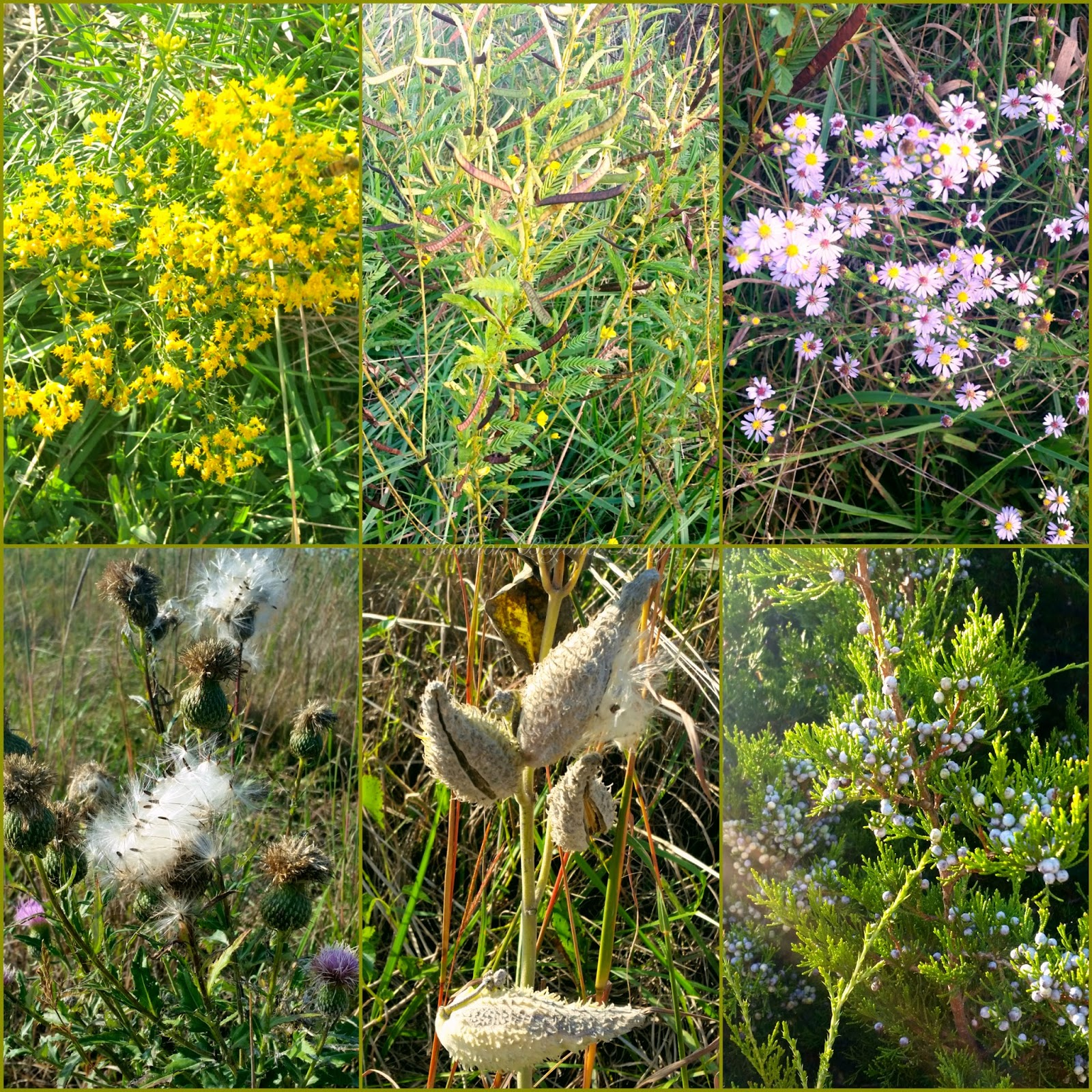 Kansas Indigenous Plants