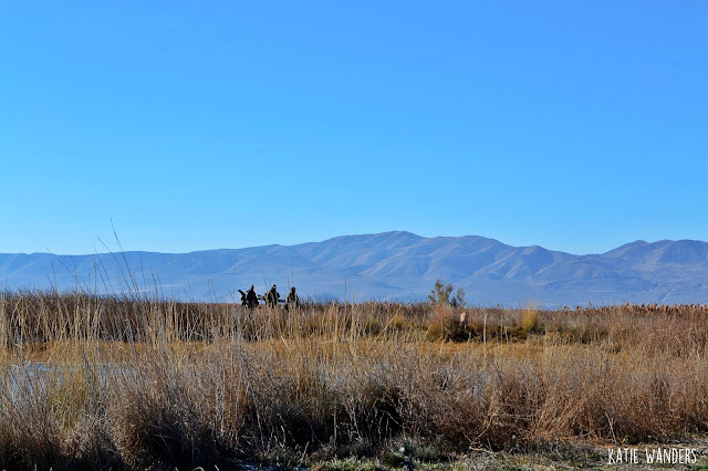 Hunters coming back to the parking area on the Bear River Migratory Bird Refuge
