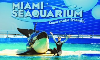 [Photos+Video] Ένα υπέροχο ενυδρείο με φάλαινες, δελφίνια και φώκιες