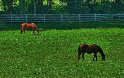 Horses near Woodbine,MD