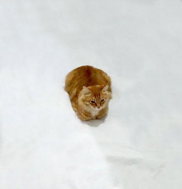Incluye a este gato en un doogle y te dará nuevas aventuras