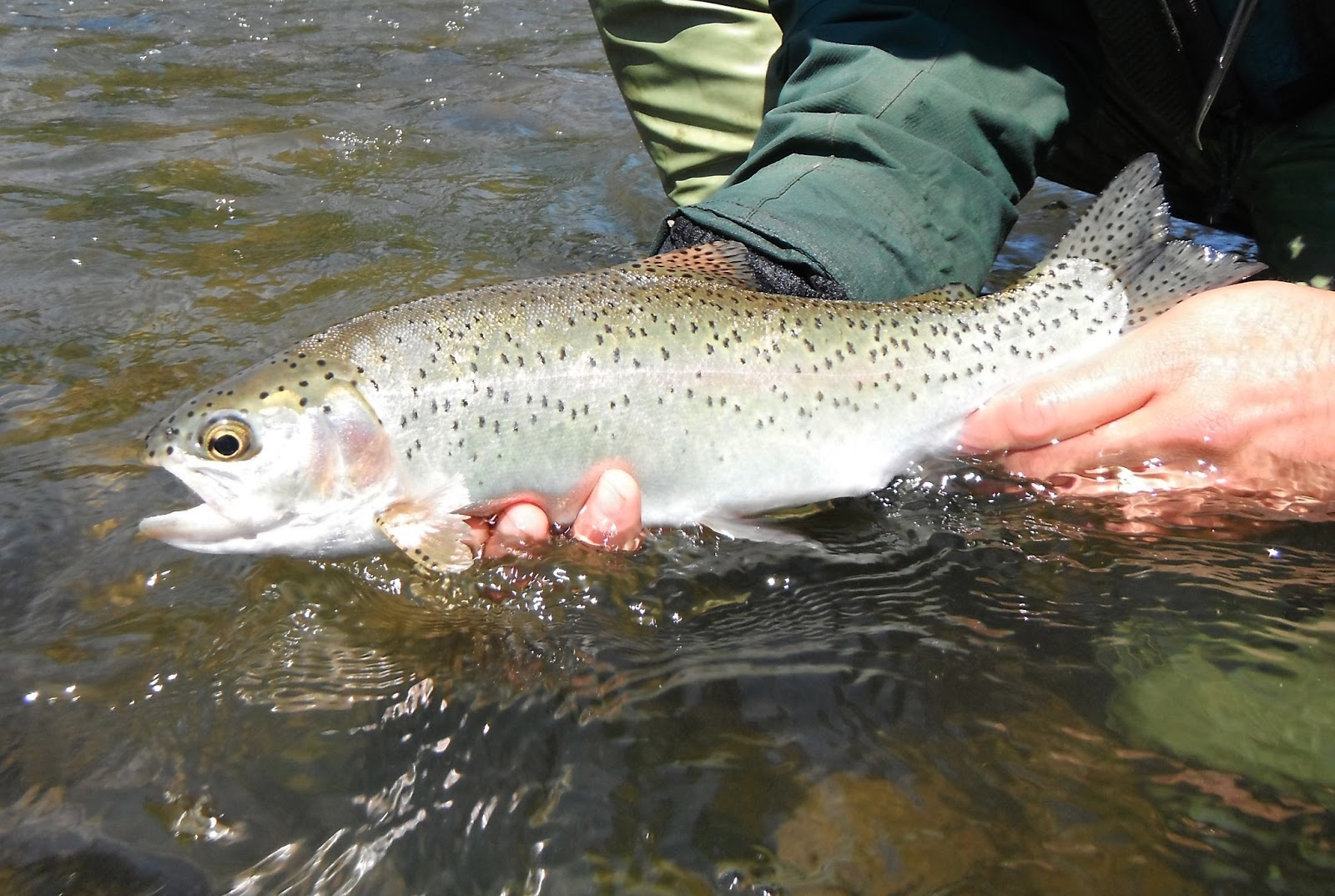 Western maryland fly fishing youghiogheny 04 25 2013 for Md trout fishing