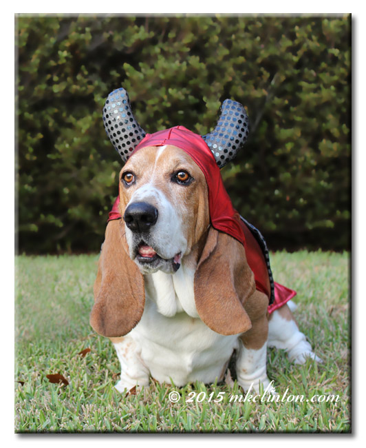 Bentley Basset in devil costume