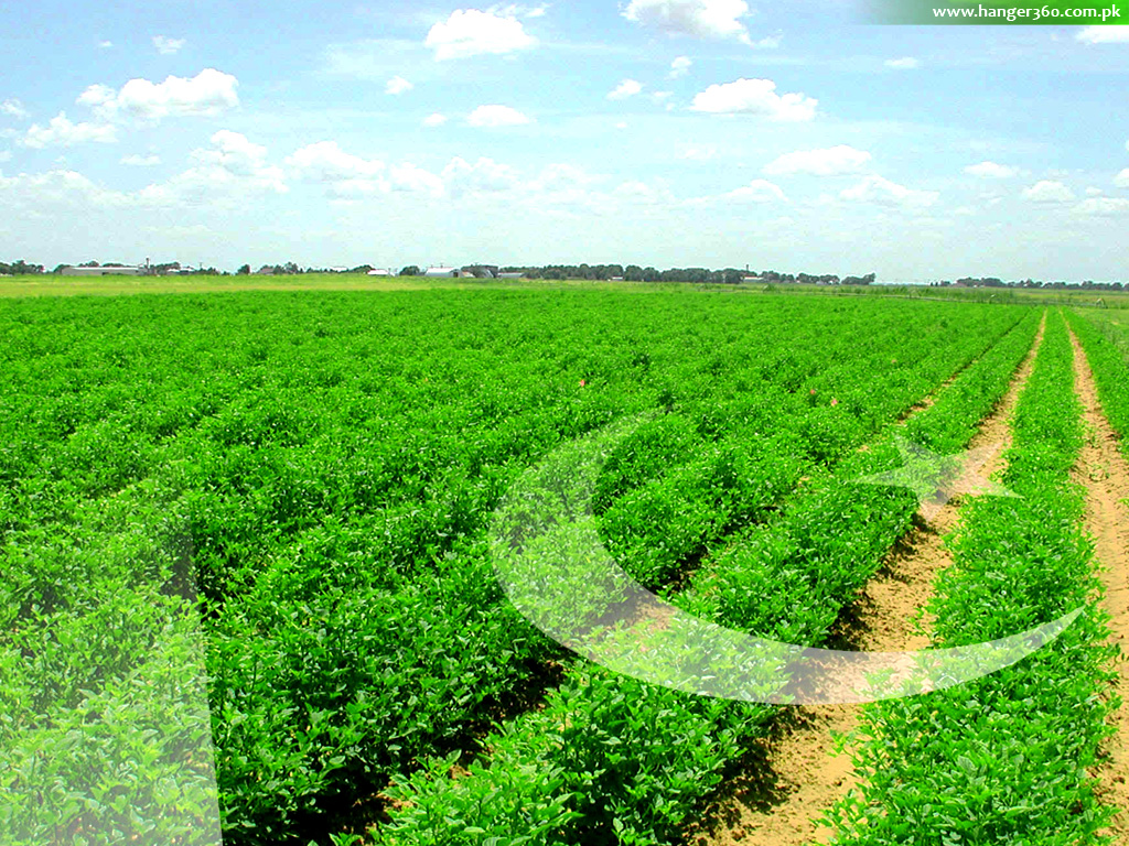 http://1.bp.blogspot.com/-RyUePDg5p3o/TkqgIObebGI/AAAAAAAADBA/zfNsYwF8tB4/s1600/Flag-of-pakistan-wallpaper-32.jpg