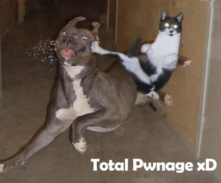 Funny Cat Pictures Suck