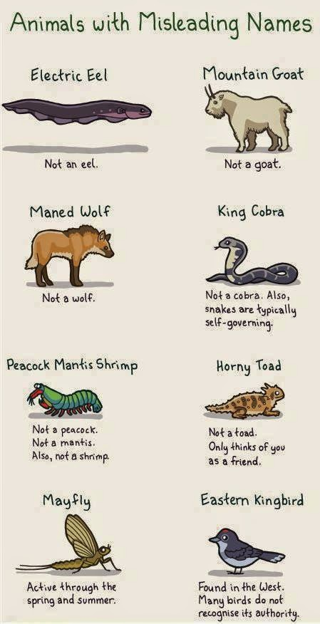 Animals With Misleading Names