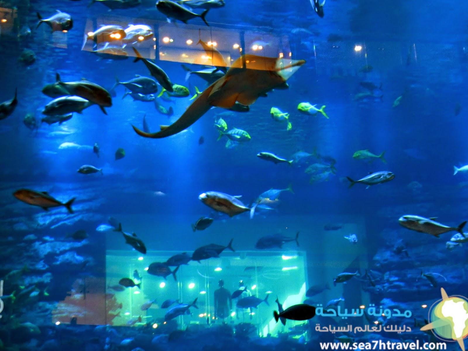 سحر السياحة في دبي اكواريوم Dubai Aquarium