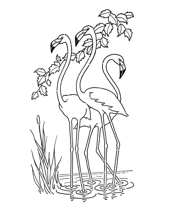 Flamingos Desenho Para Colorir