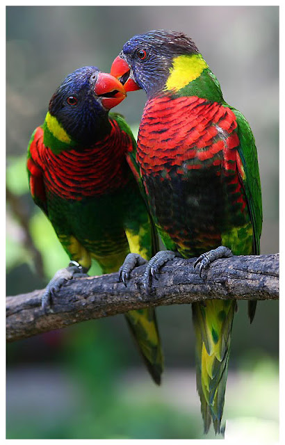 Get Images Colorful Love Birds