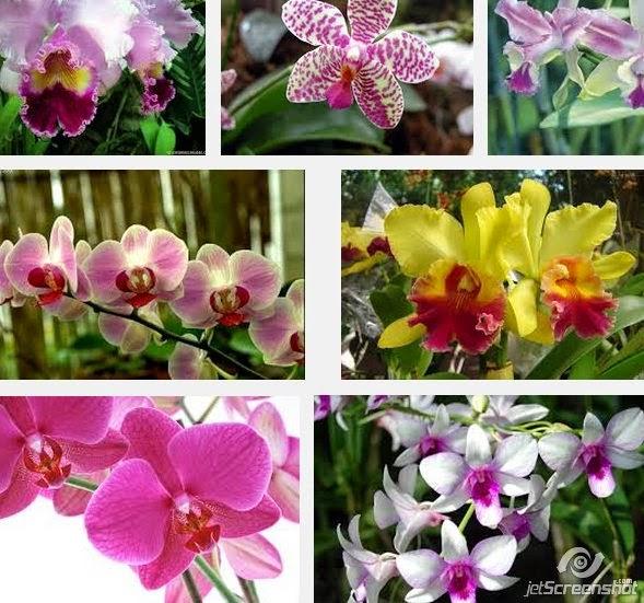 cómo revivir orquídeas