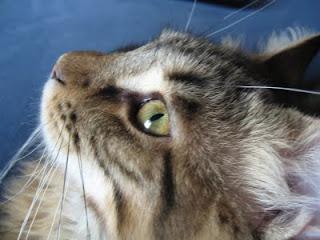 Il Blog Della Sab Salute Intestinale Cucciolo Gatto