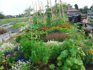 Look what's growing in the Ladner Community garden