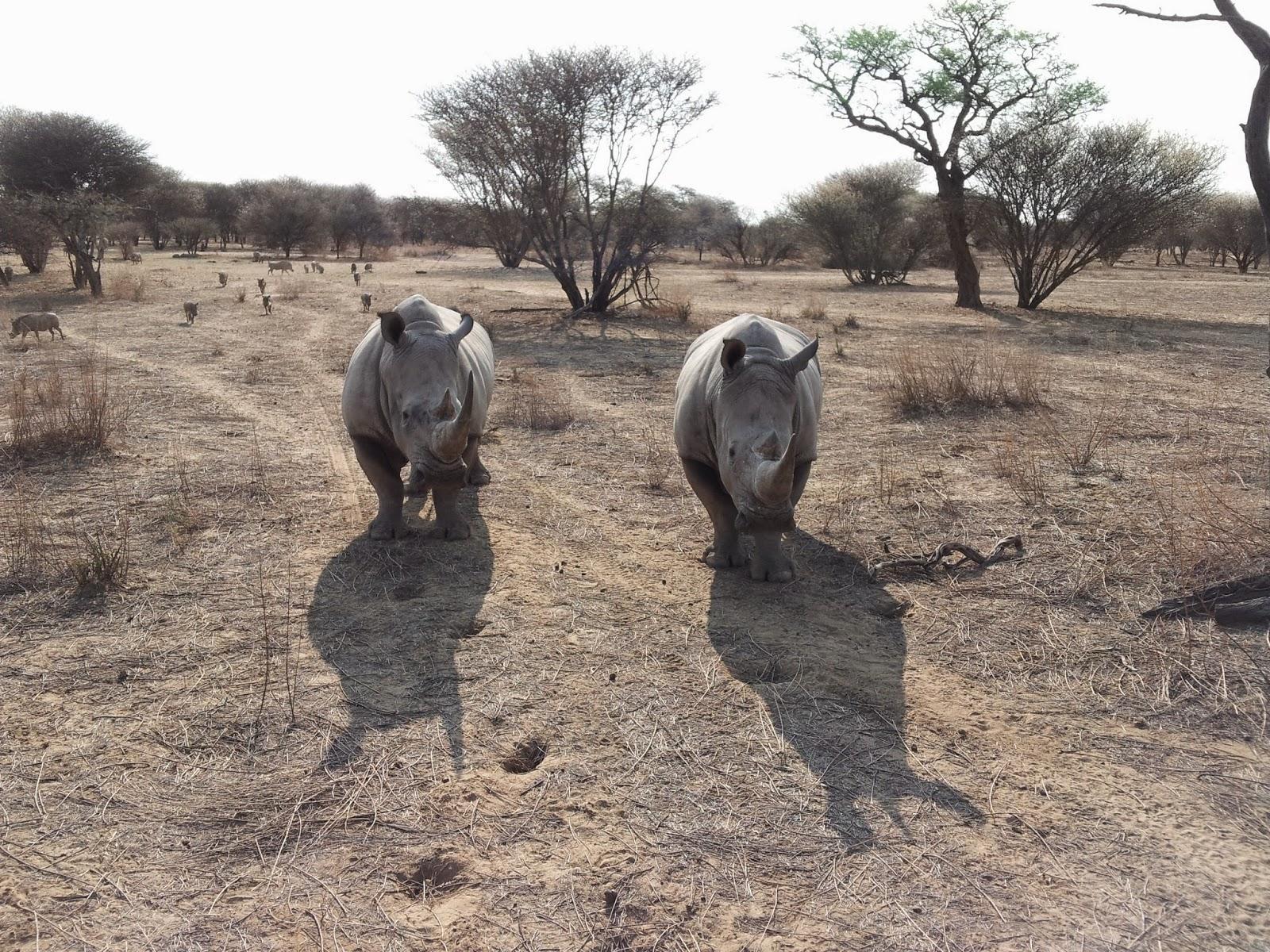 Namibian rhinos - www.namibweb.com