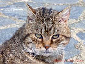 Hiperica di lady boheme ricetta dei fusilli freschi con for Il gatto inverno