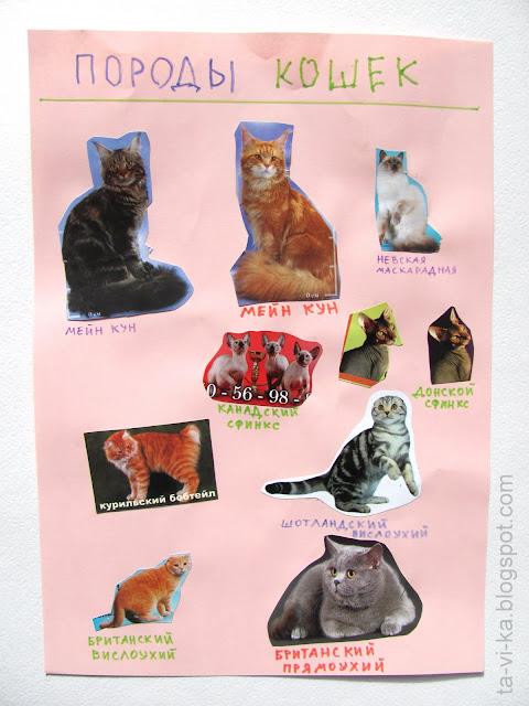 """самодельный плакат """"Породы кошек"""" breed-of-cat"""