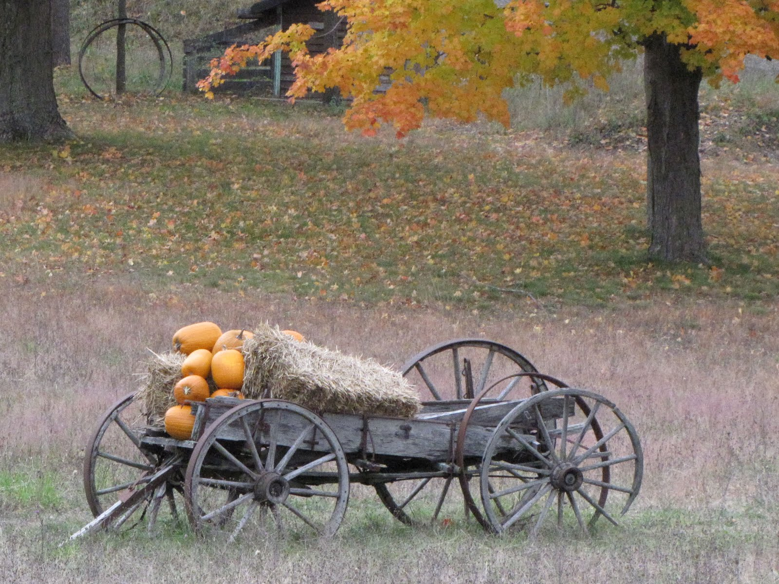 wagon with pumpkins