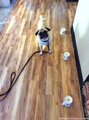 Liam the pug waiting for a treat