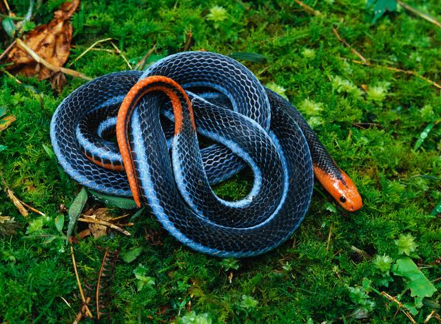 imagen de serpientes: