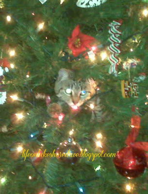 "alt=""cat in Christmas tree"""