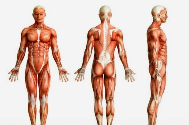 canaria biologia humana 1 : anatomia humana